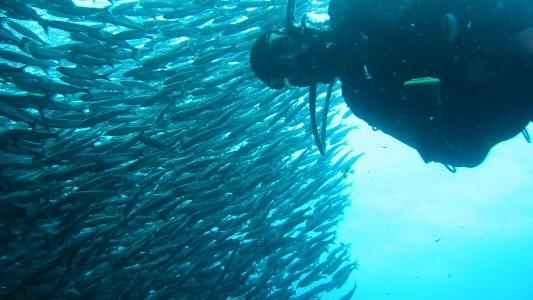 Dykningen på Galapagos