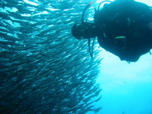 Galapagos Dykning 2006 004