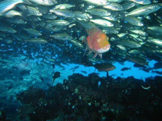 Galapagos Dykning 2006 009