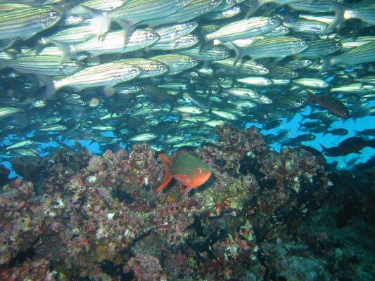 Galapagos Dykning 2006 011