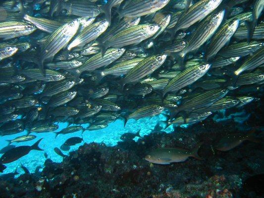Galapagos Dykning 2006 013