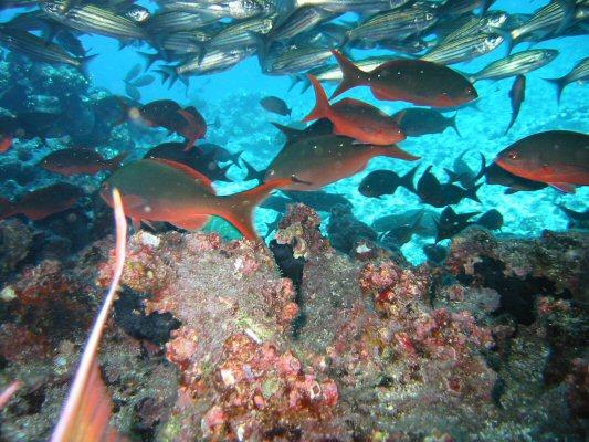 Galapagos Dykning 2006 014