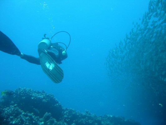 Galapagos Dykning 2006 016