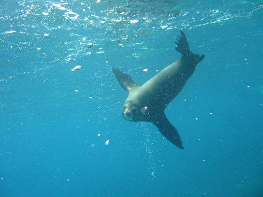 Galapagos Dykning 2006 035