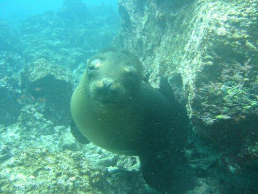 Galapagos Dykning 2006 043