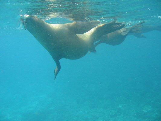 Galapagos Dykning 2006 046